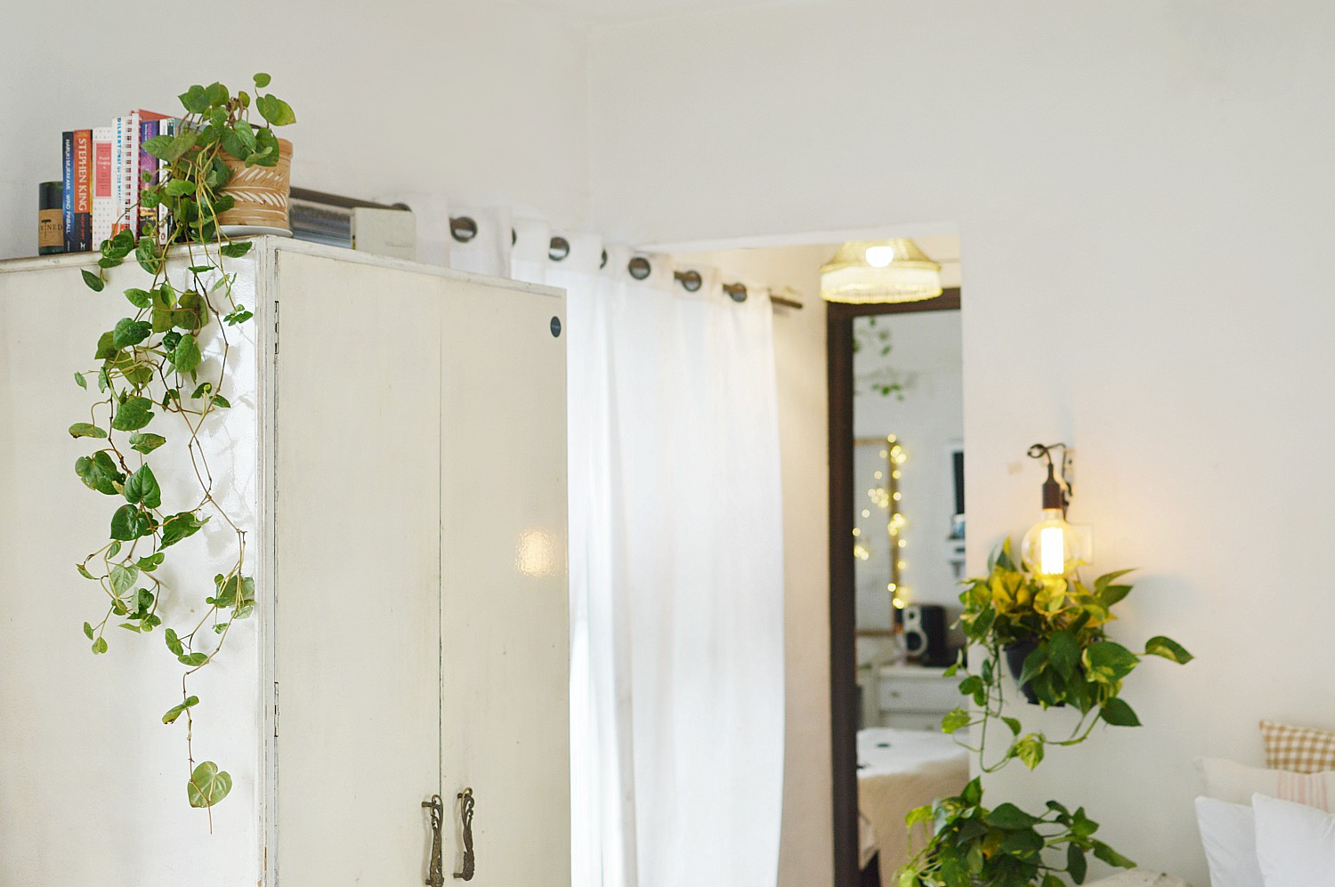 Pothos Or Money Plant And How To Decorate With Like Pro